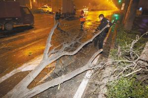 ■将树干挪到最西侧的车道上。