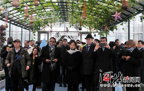 """外国友人参观访问南和县""""农业嘉年华""""项目。 南俊鸿摄"""