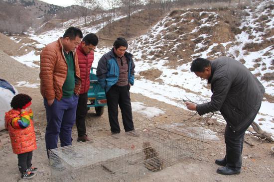 平泉县平房乡化营子村村民发现濒危野生动物—豹猫
