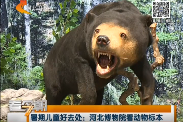 暑期儿童好去处:河北博物院看动物标本