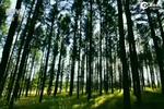 昔日荒原变百万亩林海——河北干部群众热议塞罕坝生态文明报道