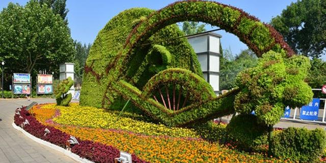 廊坊城区植物绿雕绚丽多姿