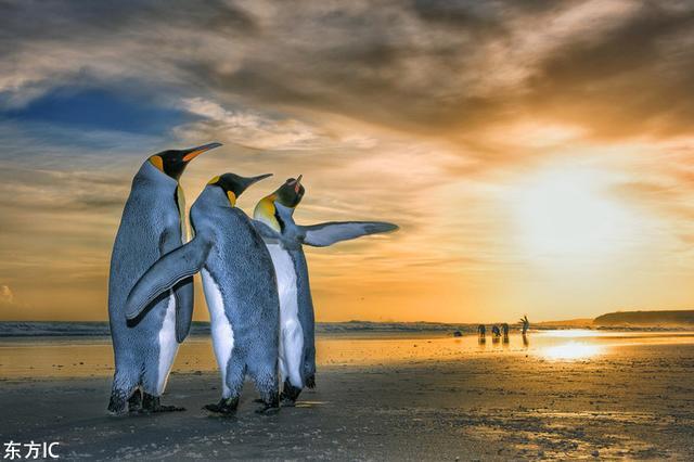 帝企鹅组团看日出 萌物来袭堪比大片
