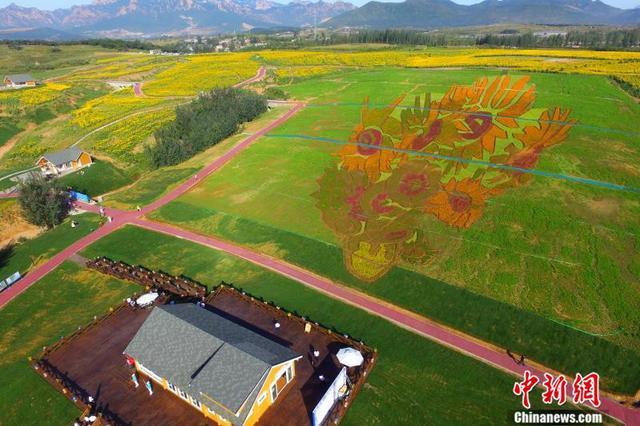 梵高的《向日葵》来了 占地40亩的花海名画亮相秦皇岛