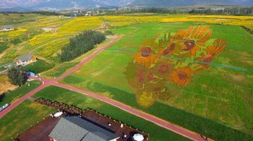 占地40亩的花海名画亮相秦皇岛
