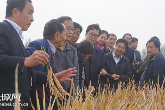 """邯郸硅谷袁隆平""""超级稻""""再创纪录"""