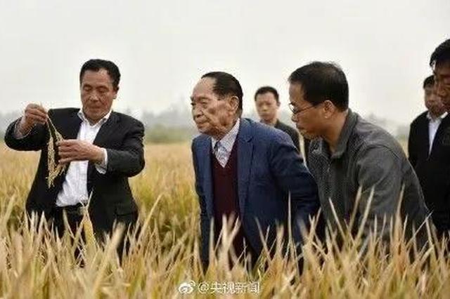 喂饱8亿人的87岁老人 刚刚在河北创造了世界纪录