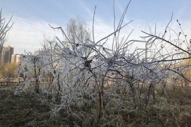 甘肃兰州小雪时节现冰挂景观