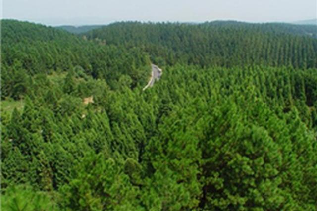 邯郸今年计划造林66万亩 争创国家森林城市