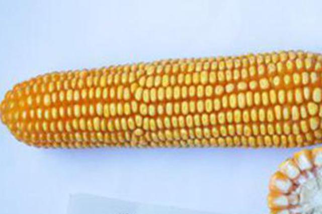 河北开展春季农作物种子市场专项检查和治理行动