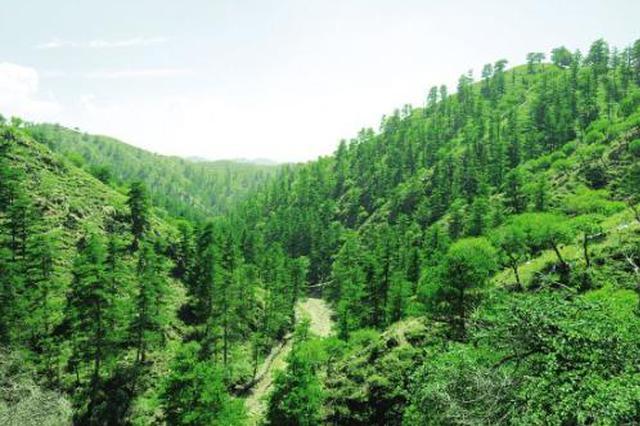 今年河北营造林任务917万亩 重点实施六大绿化工程