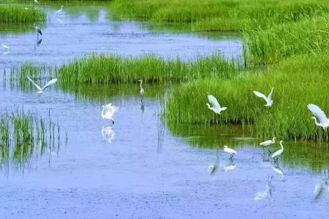京津冀区域将建成全国生态保护与修复样板