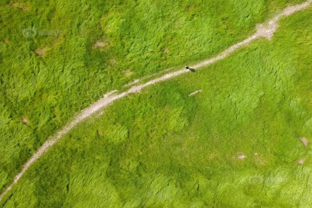鄱阳湖河床变大草原 游客踏青玩耍