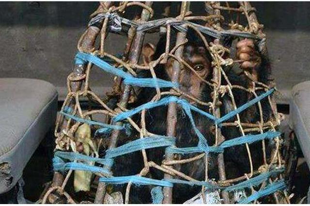 层层转手价格飙十倍 贩卖野生动物黑色利益链调查