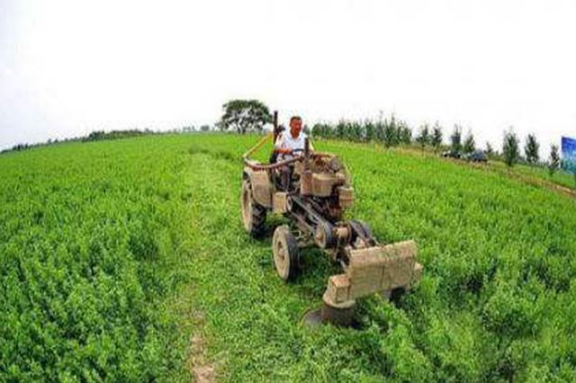 河北黄骅:盐碱地上长出320余公顷绿洲