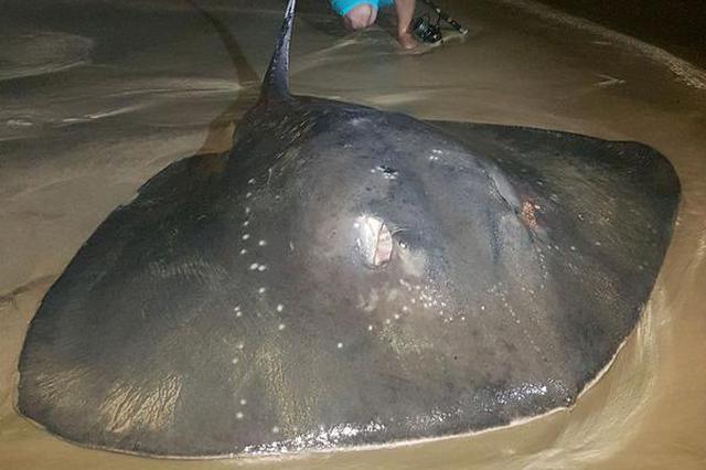 南非男子钓到381斤巨型黄貂鱼 花8个小时才拉上岸