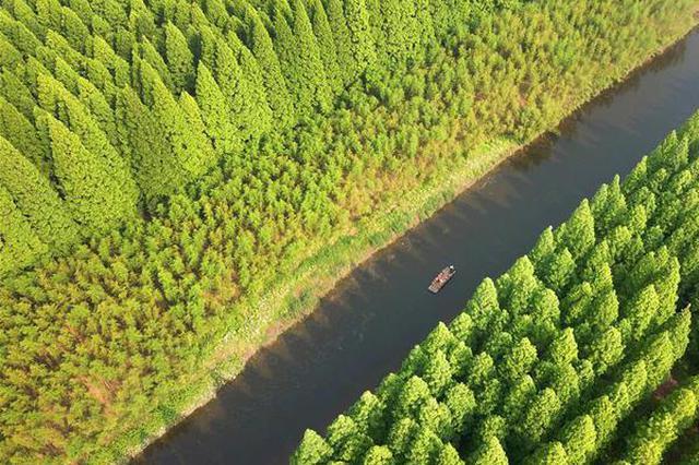 江苏黄海国家森林公园美如画