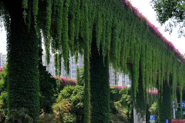 """福州一立交桥披上""""绿外套"""":减尘又降温"""