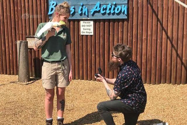 """男生""""买通""""鹦鹉 向动物管理员女友求婚"""
