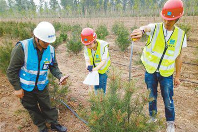 """雄安新区营造近自然森林:每棵树都有""""身份证"""""""
