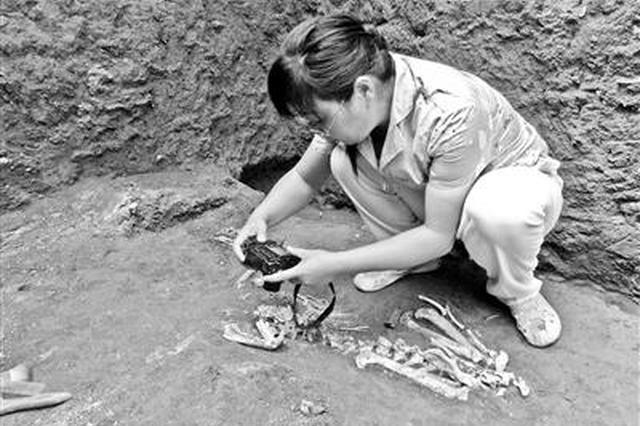 2200年前古墓现灭绝长臂猿遗骸 属长臂猿新属种