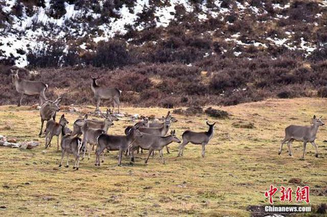 垃圾随处可见野生动物遭惊扰 多景区发布禁游令