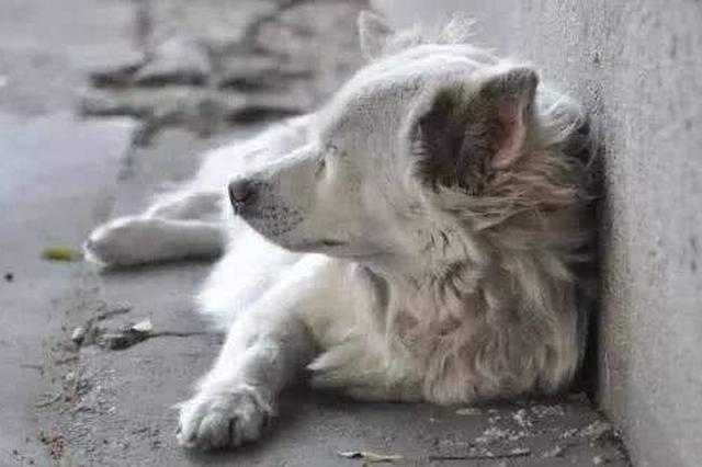 石家庄:流浪犬为城市管理和卫生安全带来隐患