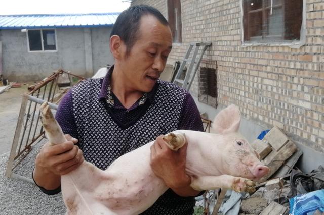 """贫困户发养猪视频成""""网红"""" 高票当选村干部"""
