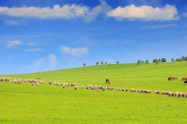 我国天然草原面积居世界首位 约占全球草原面积12%