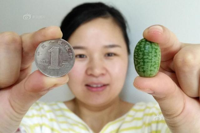 """""""拇指西瓜""""125g卖29.9元 吃瓜群众直呼:吃不起"""