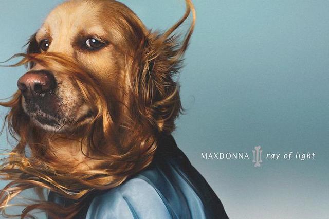 狗狗模仿麦当娜拍同款照片爆红网络