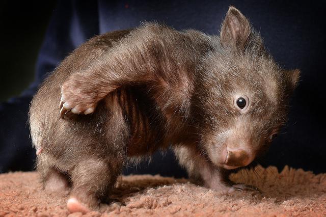 小动物也爱挠痒痒:解锁奇葩姿势千奇百怪