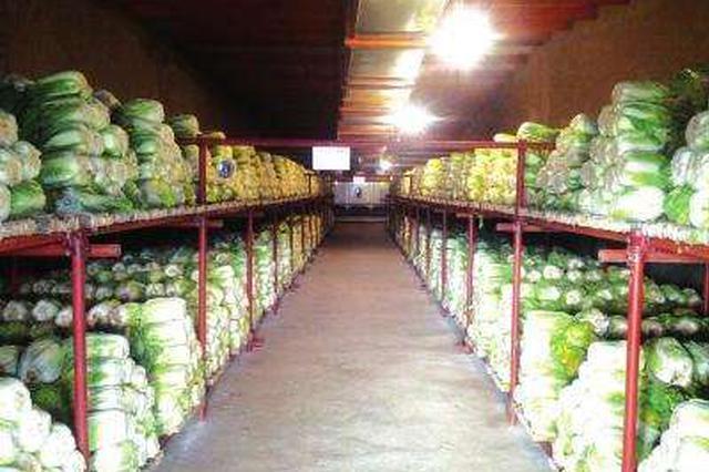 石家庄:冬春蔬菜储备5种 不少于5天的消费量