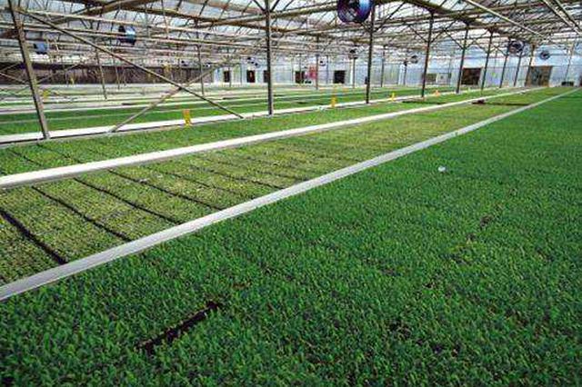 承德加速推进绿色农业健康发展 严格控肥控药