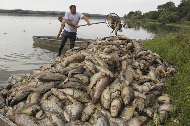 捷克现极端高温天气 几十吨死鱼浮在水面
