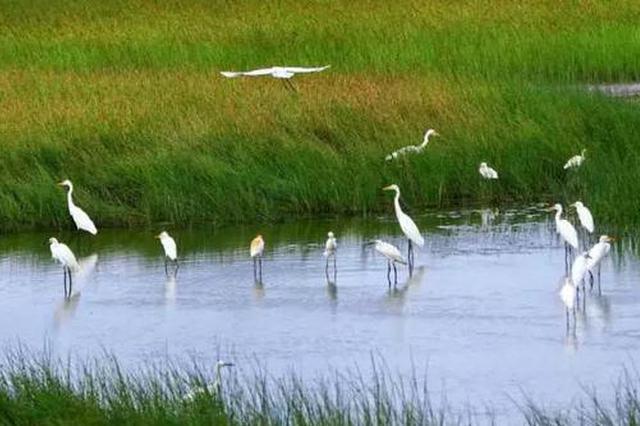 石家庄要建一座占地116亩的湿地公园 位置在这里