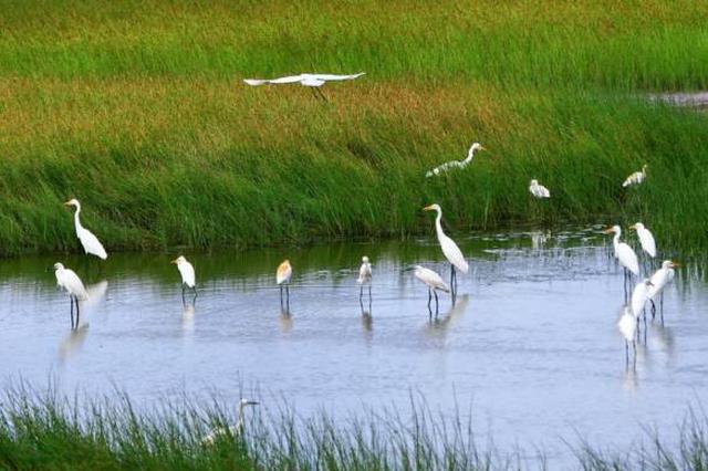 重磅:石家庄要新建一座湿地公园 占地超116亩