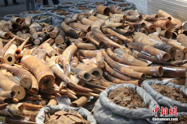 香港查获大量濒危物种制品 价值1900万港币