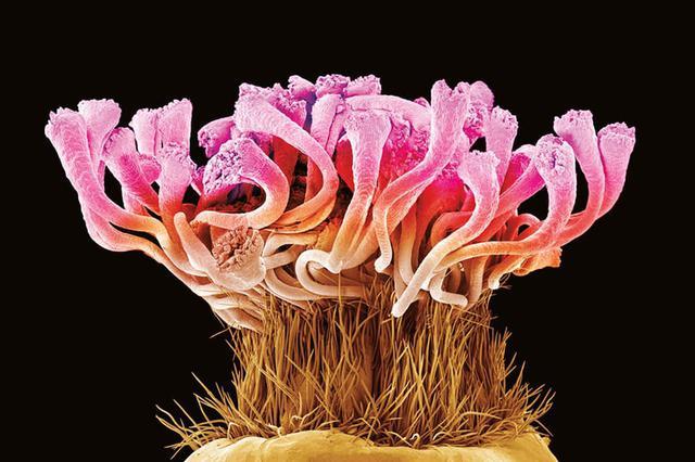 植物生命的科学之美:显微镜下展示奇妙植物世界