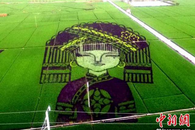 广西高铁沿线现大型稻田艺术景观带