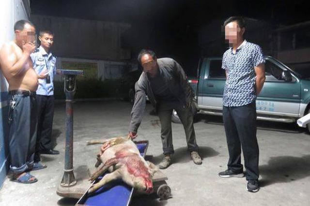 凉山将出台政策:游客车辆不慎撞死家畜按市价赔偿