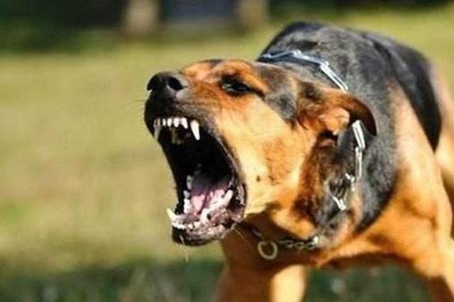 狗咬死人恶性事件又现 治理狗患该法律出重手了