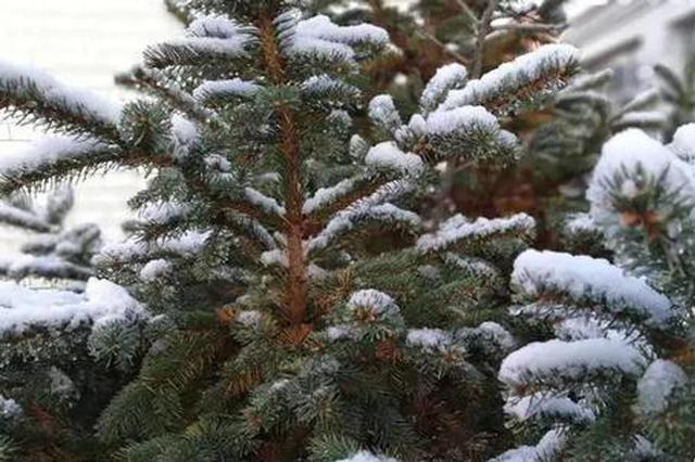 河北一地下雪了 入秋后最强大风要来阵风10级
