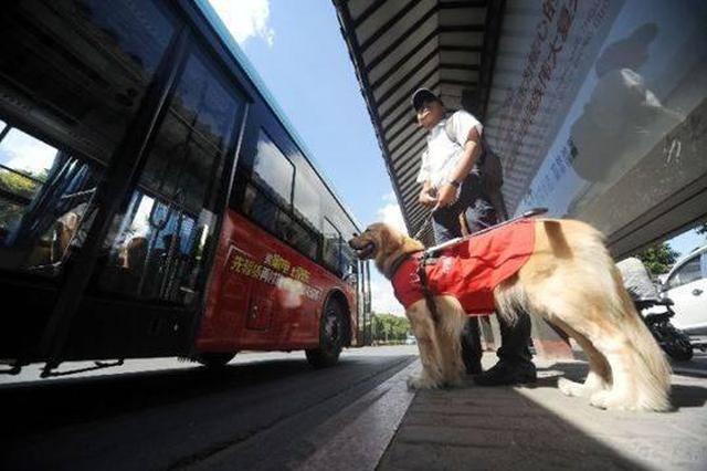 国际盲人节:携导盲犬出行还有诸多不顺