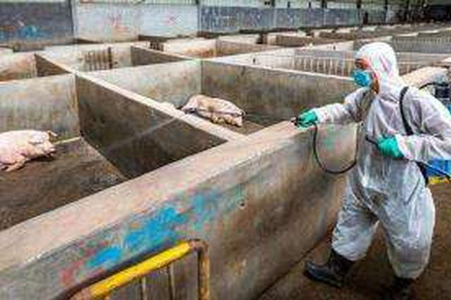 辽宁发生3起非洲猪瘟疫情 已得到有效处置