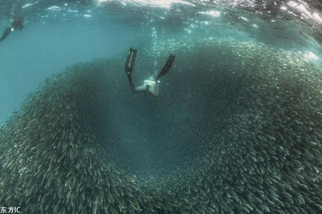 密恐深入!潜水者南非深海偶遇沙丁鱼大军