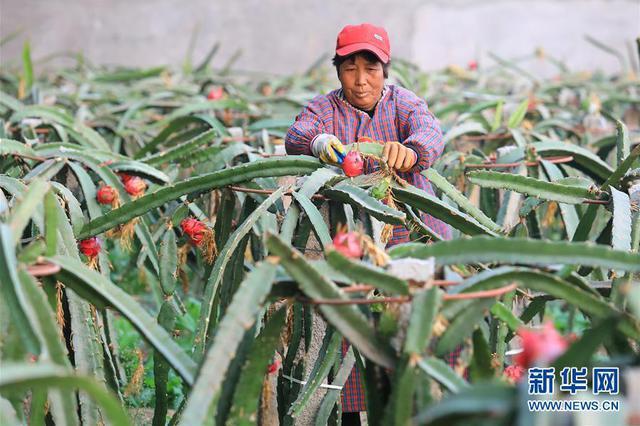 河北平山:農業園區助力脫貧致富