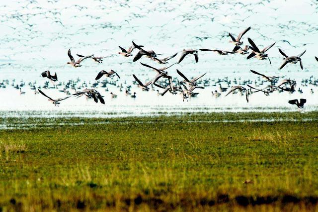 河北严打乱捕滥猎和非法经营候鸟犯罪活动