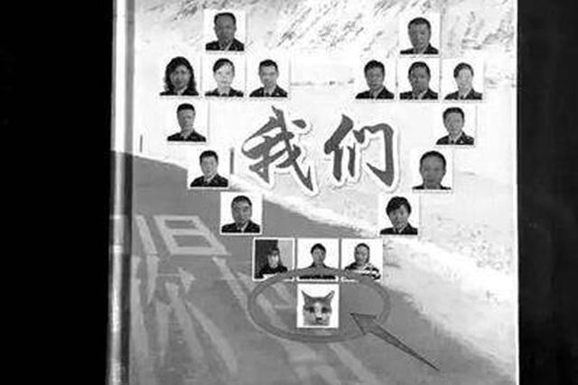 """流浪貓成工商所""""員工"""":在調解室抱大腿緩解氣氛"""
