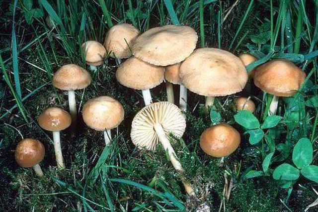 科学家发现一个重逾400吨的大蘑菇 生长至少2500年